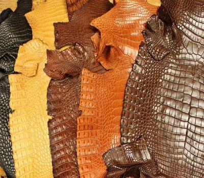túi bao tử da cá sấu - cá sấu minh châu